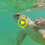 titel_turtlevideo