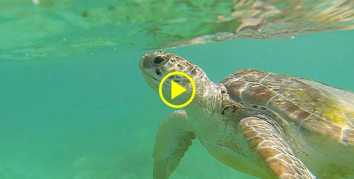 wie schlafen wasserschildkröten