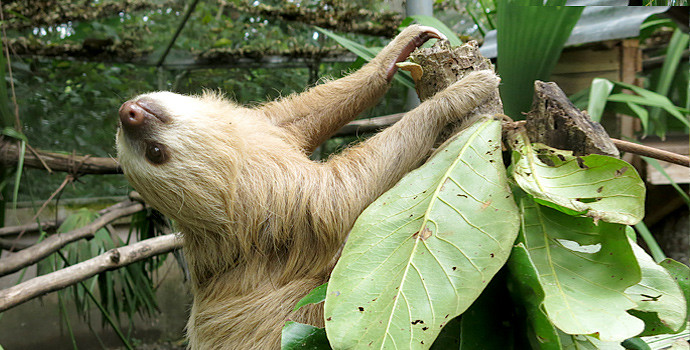 titel_sloth