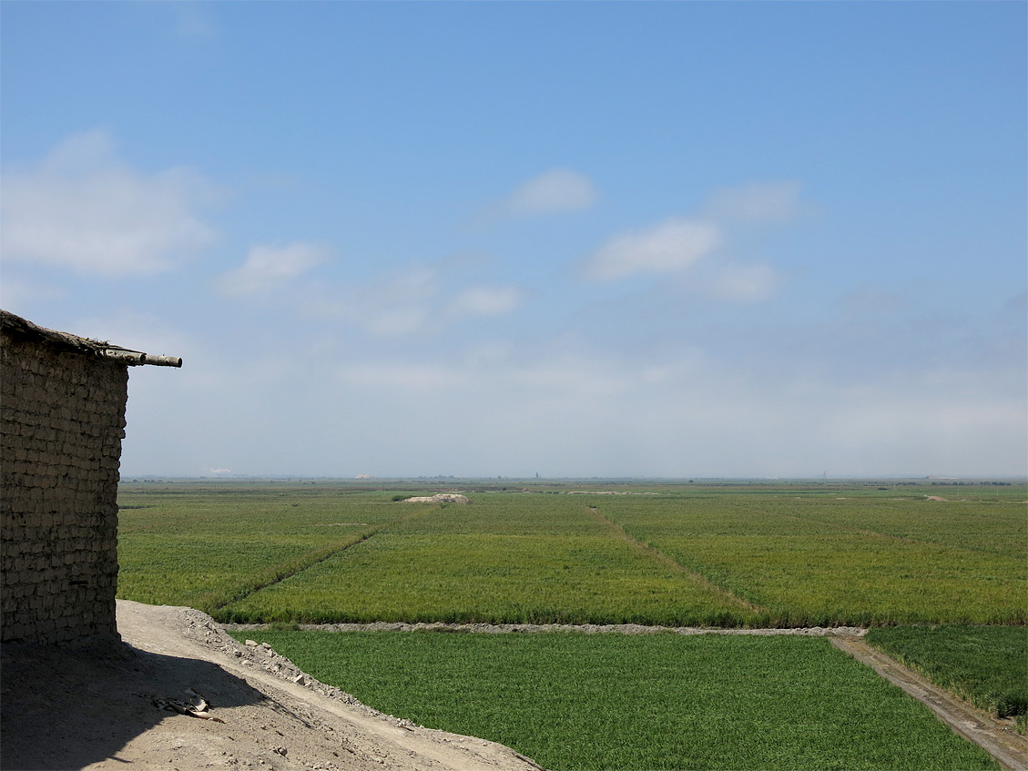Zuckerrohrfelder soweit das Auge reicht.